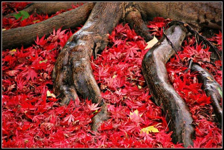 roots red leaves