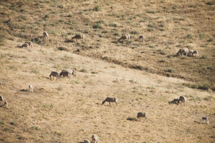 pasture near La Peñuela dehesa jiennense rufo_83 flickr