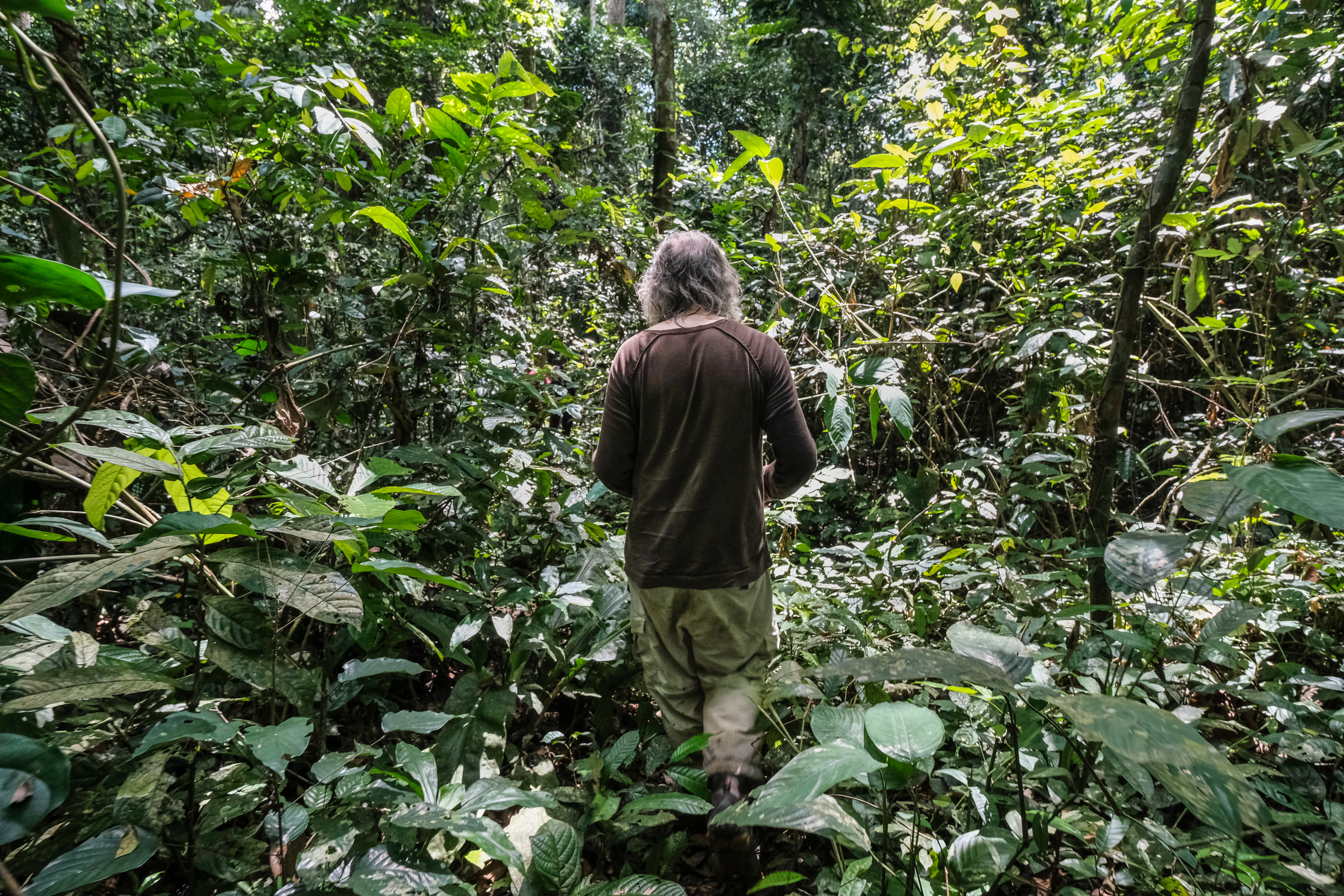 Hans Beeckman, Royal Museum for Central Africa wood biology expert, in Yangambi - DRC.