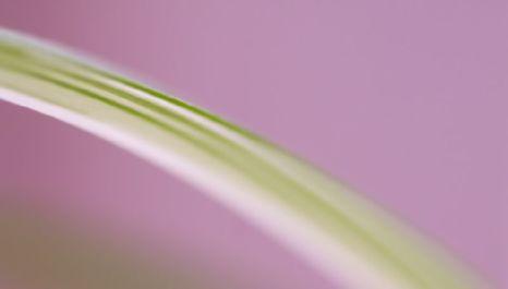 leaf peace Martin Gommel Flickr 403867182_562fe4a0ae_o